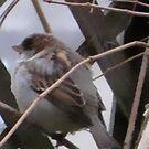 Winter Sparrow by ArtOfE