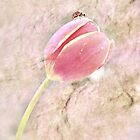 Lovely Little Lady And Her Tulip by Shelly Harris