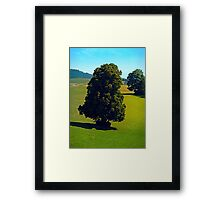 Another boring old tree Framed Print