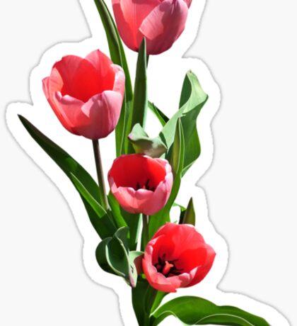 Tulip Family Sticker