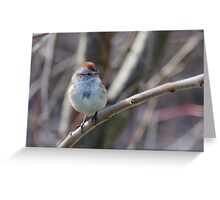 an American Tree Sparrow Greeting Card