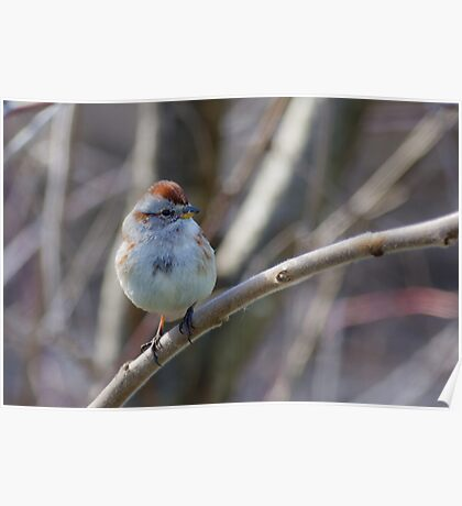 an American Tree Sparrow Poster