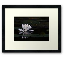 Lillypad flower in a pond Framed Print