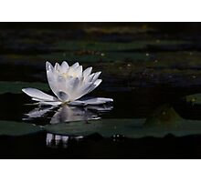 Lillypad flower in a pond Photographic Print