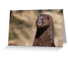 Mink Greeting Card