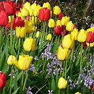 Tulips And Bluebells by Fara