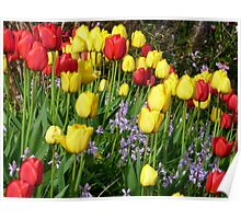 Tulips And Bluebells Poster