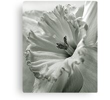Daffodil Detail Canvas Print