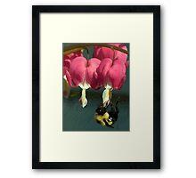 Bee On Bleeding Hearts (painted) Framed Print