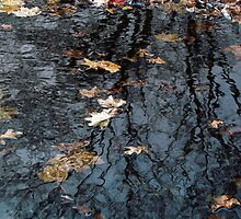 Rippled Reflection by Nevermind the Camera Photography