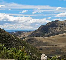 one sheep by Anne Scantlebury