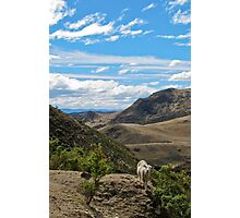 one sheep Photographic Print