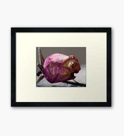 Resting on a Thorn Framed Print