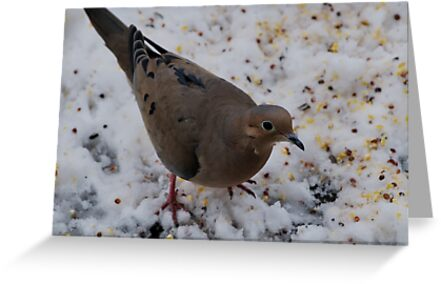 Mourning Dove Eating by Barry Doherty