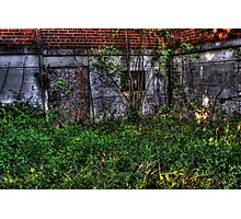 Nature taking it back Photographic Print