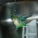 Ricco the Lovebird Loves His Bath by mermaidsbite