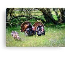 Male Turkeys Canvas Print