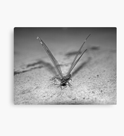Ant-lion on textured background in black and white Canvas Print