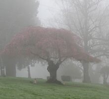 Foggy area with tree by AuntieBarbie