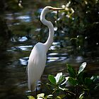 Great Egret (Ardea alba)  by Odille Esmonde-Morgan