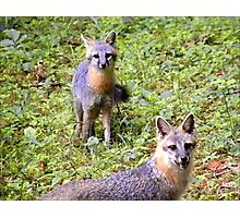 Mother Fox With Kit  Photographic Print