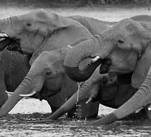 Drinking buddies by Explorations Africa Dan MacKenzie
