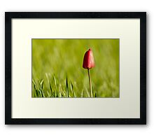 Lone Tulip Framed Print