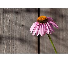 Purple Cone Photographic Print