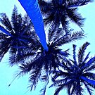 Palm Trees by Blake Johnson