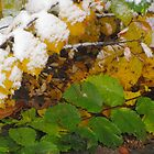 Snow Covered Fall Leaves by dfrahm