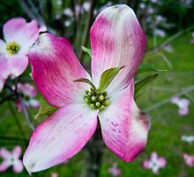 Pink Dogwood Blossom with a Twist by Jerry Philpot