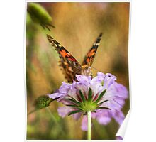 Portrait of a Painted Lady Poster
