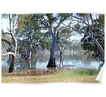Mallee Forest and Wetlands Poster