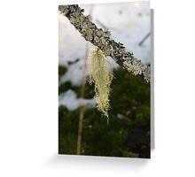 Nature's beard Greeting Card