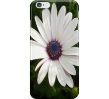 Beautiful Osteospermum White Daisy With Purple Center  iPhone Case/Skin