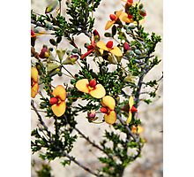 Mallee Forest and Wild Flowers Photographic Print