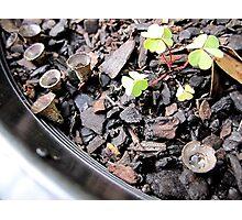 Potplant Inhabitants 1 Photographic Print
