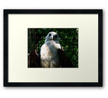 Philippine Eagle Framed Print