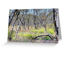 Mallee Forest and Wild Flowers Greeting Card