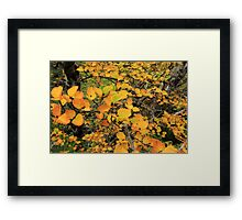 FAGUS UPDATE from Crater Lake Framed Print