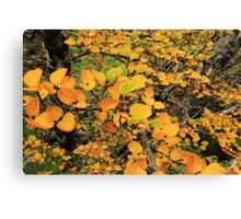 FAGUS UPDATE from Crater Lake Canvas Print