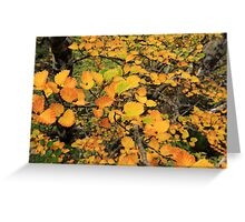 FAGUS UPDATE from Crater Lake Greeting Card