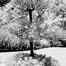 Infrared Tree by Denny0976