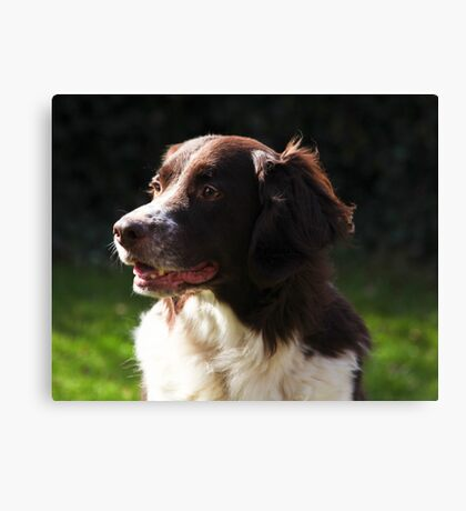 Portraitsession of Luca, a Dutch Partridge dog Canvas Print