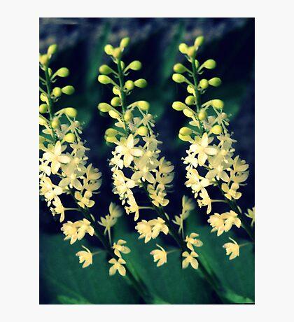 Wild in three... Photographic Print
