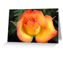 Colours Of Life Greeting Card