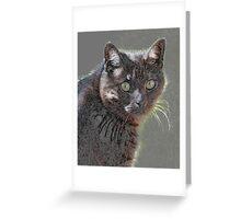 Kitty Kat Kard Greeting Card