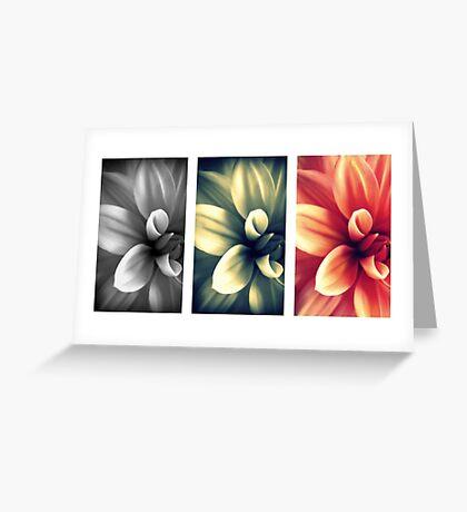 Dahlia - Triptych Greeting Card
