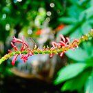 Flower Stem, Kew Gardens by MaggieGrace