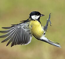 Great tit by Photo Scotland